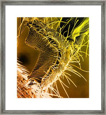 Fly Proboscis, Sem Framed Print by Biomedical Imaging Unit, Southampton General Hospital