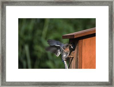 Fly Through Framed Print by Skip Willits