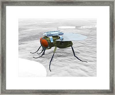 Fly With Microchip Framed Print by Christian Darkin