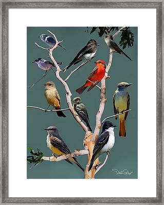 Flycatcher Collage Framed Print by David Salter