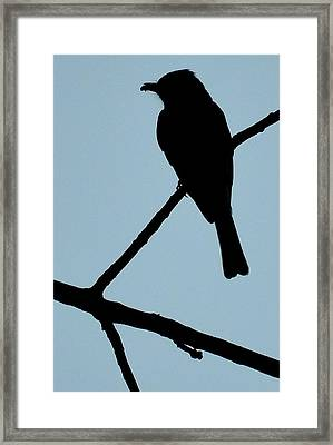 Flycatcher With Bug Framed Print