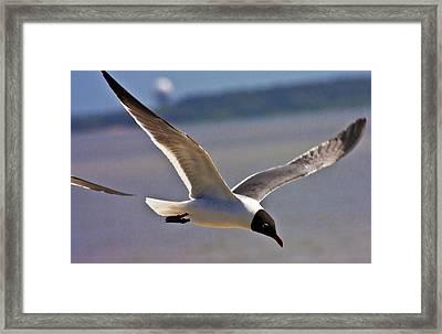 Flyin' Free Framed Print by Betsy Knapp