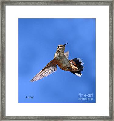 Flying Backwards - No Problem Framed Print