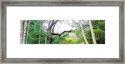 Framed Print featuring the photograph Flying Branch by Pamela Hyde Wilson