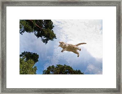 Flying Cat Framed Print by Micael  Carlsson