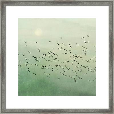 Flying Flock Of Birds Framed Print by Laura Ruth