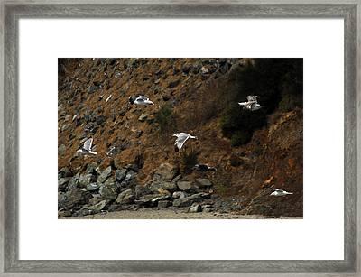 Flying For Dummies Framed Print