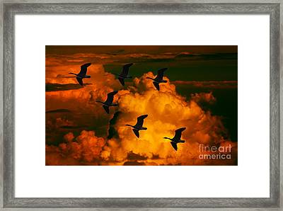 Flying High In The Sky Framed Print by Marjorie Imbeau