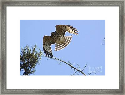 Framed Print featuring the photograph Flying High by Johanne Peale