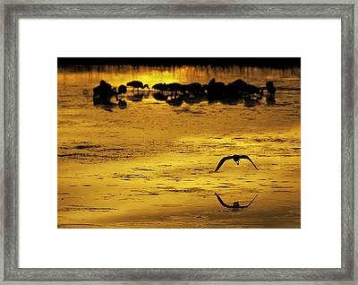 Flying Home - Florida Wetlands Wading Birds Scene Framed Print by Rob Travis