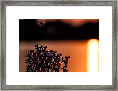 Framed Print featuring the photograph Flying Home by Tom Gort
