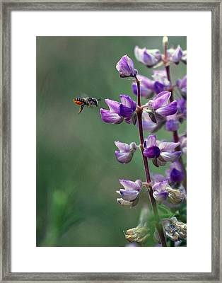 Flying In Framed Print