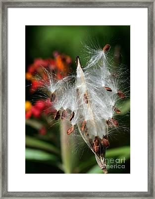 Flying Milkweed Silk Framed Print by Sabrina L Ryan