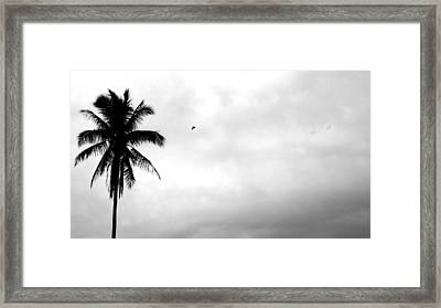 Flying-off From Palm Tree Framed Print by Rosvin Des Bouillons