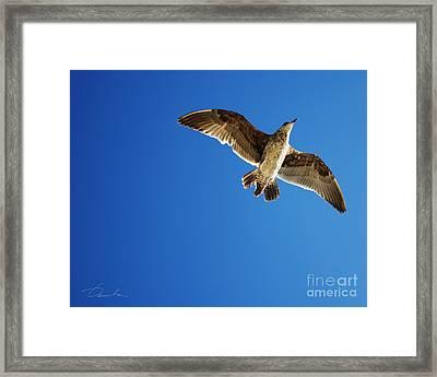 Flying Over Framed Print by Danuta Bennett