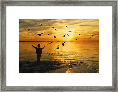 Flying Seagull With Silhouette Framed Print by Kam