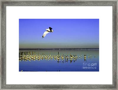 Framed Print featuring the photograph Flying Solo by Clayton Bruster