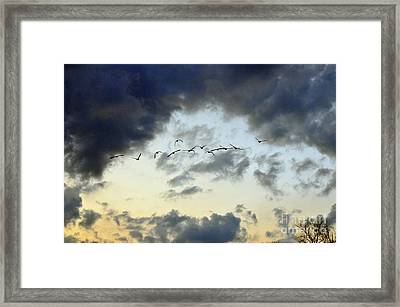 Flying South For The Winter Framed Print by Paul Ward