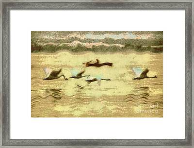 Flying Swans Framed Print by Odon Czintos