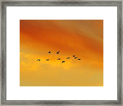 Flying To The Roost Framed Print by Tony Beck