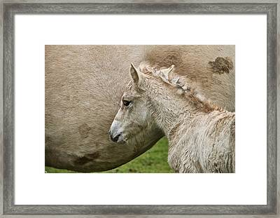 Foal Framed Print by Odd Jeppesen