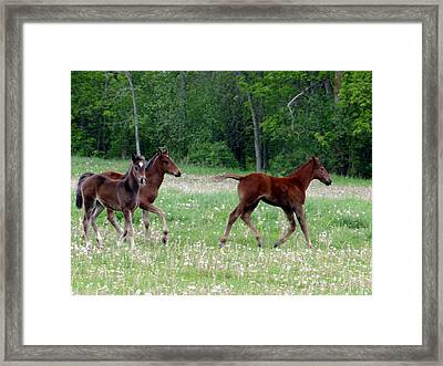 Foals In Dandelions Framed Print by Bruce Ritchie