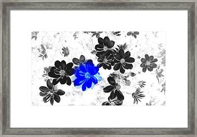 Focal Black And White Beauty Framed Print by Kim Galluzzo Wozniak
