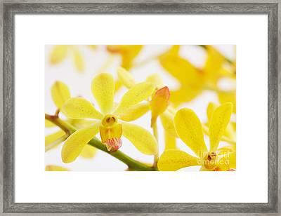 Focus On Framed Print