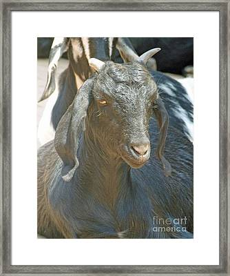 Focused On You Framed Print by Louise Peardon