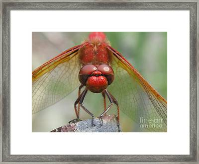 Focused Framed Print by Tina Marie