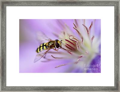 Focussing Framed Print by LHJB Photography