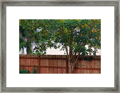 Framed Print featuring the photograph Fog In Olympia II by Jeanette C Landstrom