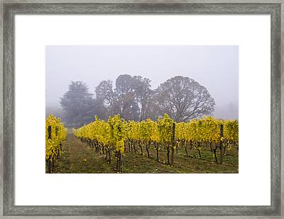 Fog In The Fall Framed Print by Jean Noren