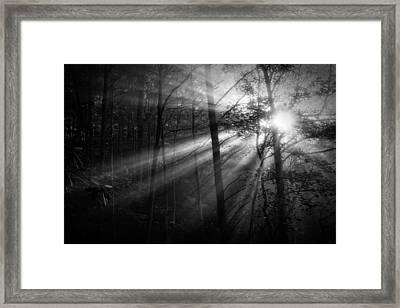 Foggy Forest Framed Print by Matt  Trimble