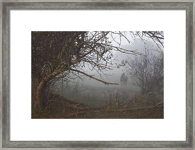 Foggy Horse Framed Print