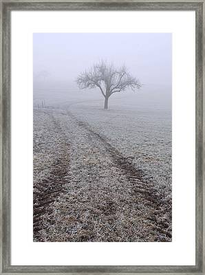 Foggy Landscape With Tree Framed Print by Matthias Hauser