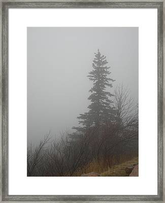 Foggy Sentinel Framed Print by Skip Willits