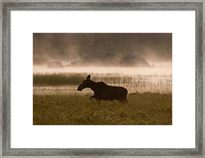 Framed Print featuring the photograph Foggy Stroll by Brent L Ander