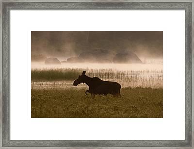 Foggy Stroll Framed Print
