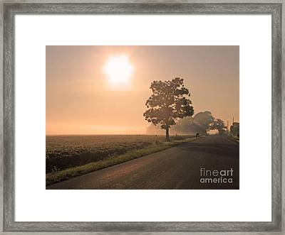 Foggy Sunrise On Soybean Field Framed Print