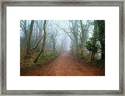 Foggy Woodland Trail Framed Print by Julie L Hoddinott