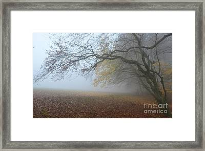 Fogy Forest In The Morning 1 Framed Print