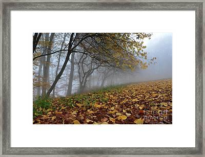 Fogy Forest In The Morning 2 Framed Print by Bruno Santoro
