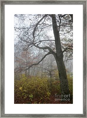 Fogy Forest In The Morning 4 Framed Print