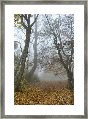 Fogy Forest In The Morning Framed Print