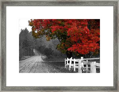 Foliage And Black And White Framed Print by Tammy Collins
