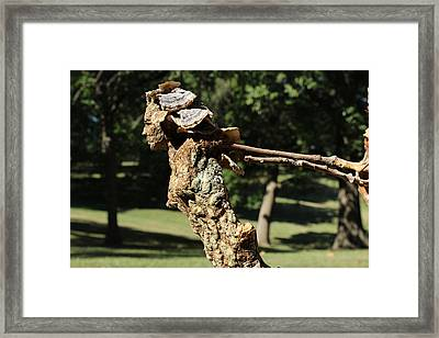 Foliated Victory Among The Trees Framed Print by Adam Long