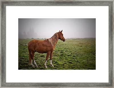 Follow Me Framed Print by Dan Mihai