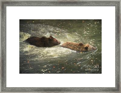 Framed Print featuring the photograph Follow Me by Roy  McPeak