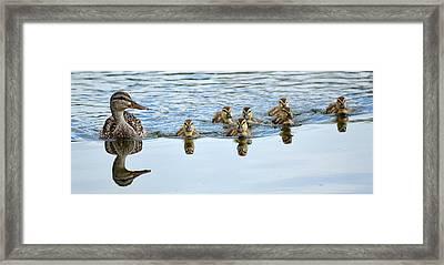 Follow Moms Lead Framed Print by Fraida Gutovich